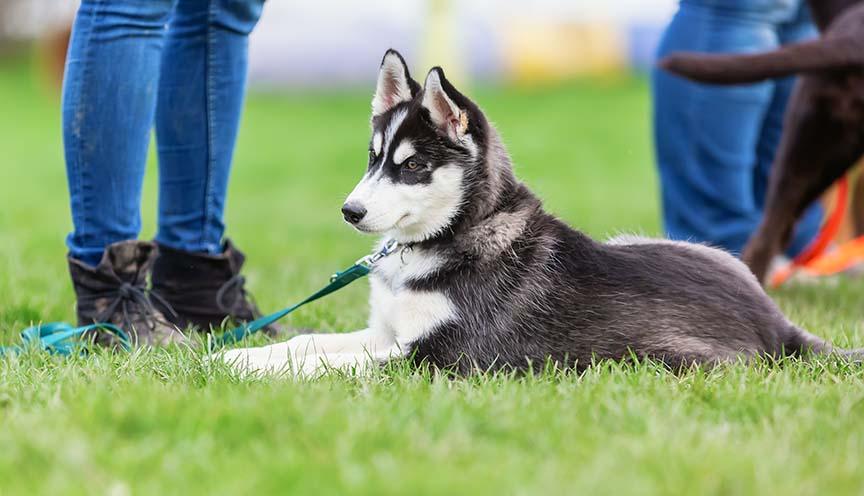 Puppy Training Savannah GA